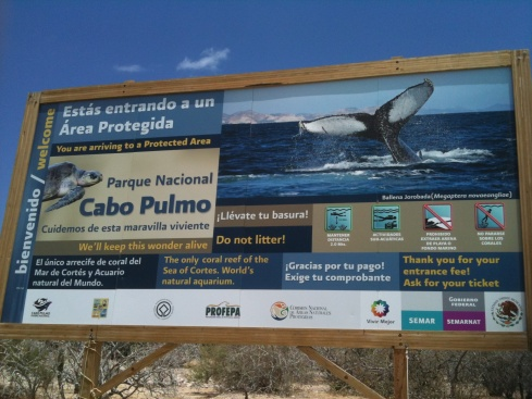 Fish populations returned more than 460% in the Cabo Pulmo MPA in Mexico.