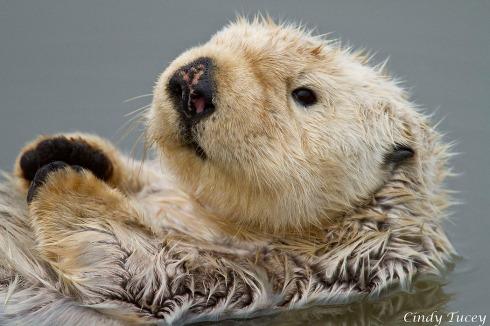 FSO_Otter_Closeup