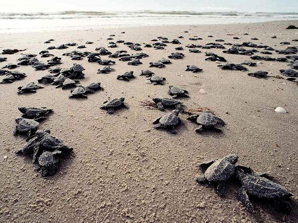 J Nichols on Why We Should Save Sea Turtles and Why Our Brains Need the Ocean (2/4)