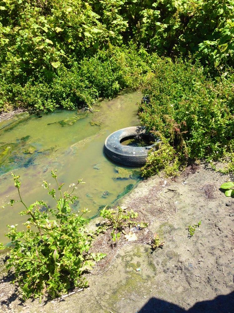 The Baja Malibu/Campo Torres Sewage Gulch (4/4)